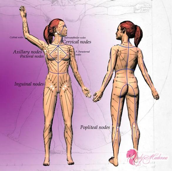 лимпфодренажная карта тела