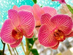 как освещать орхидею