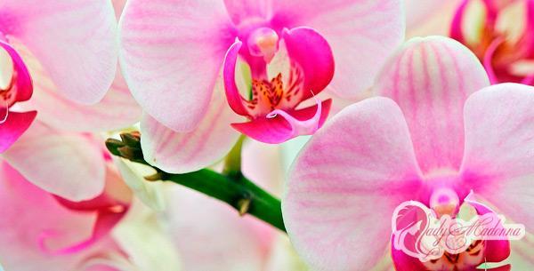 как правильно пересадить орхидею в комнатных растения