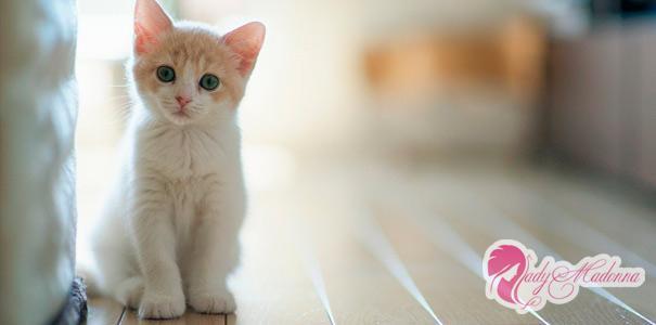 Что такое стерилизация кошки и сколько это стоит
