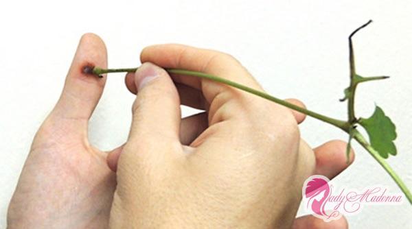 Как убрать бородавку на пальце ноги