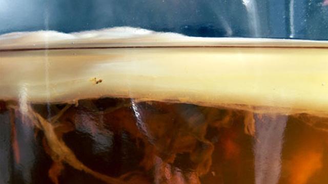 Как вырастить, как ухаживать и какие полезные свойства у чайного гриба