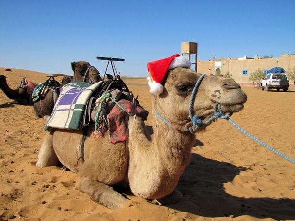 новый год с Сахаре