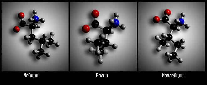 Аминокислоты BCAA схема